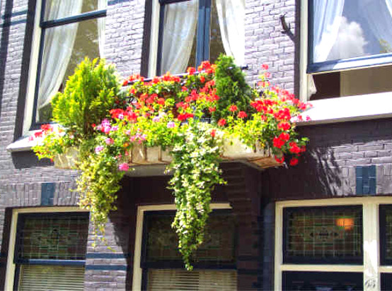 B&B front flower boxes